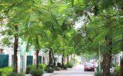 Dọc những tuyến đường rộng 40m, 27m, 11m xuyên suốt khu đô thị là những tán cây cao 5-6m được trồng và bố trí hài hòa